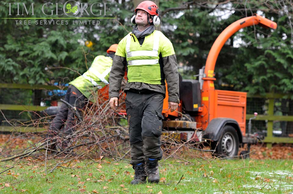 Tim George Tree Services Ltd - Surrey